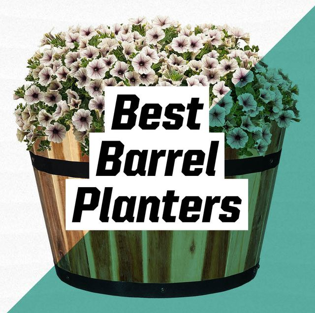 best barrel planters