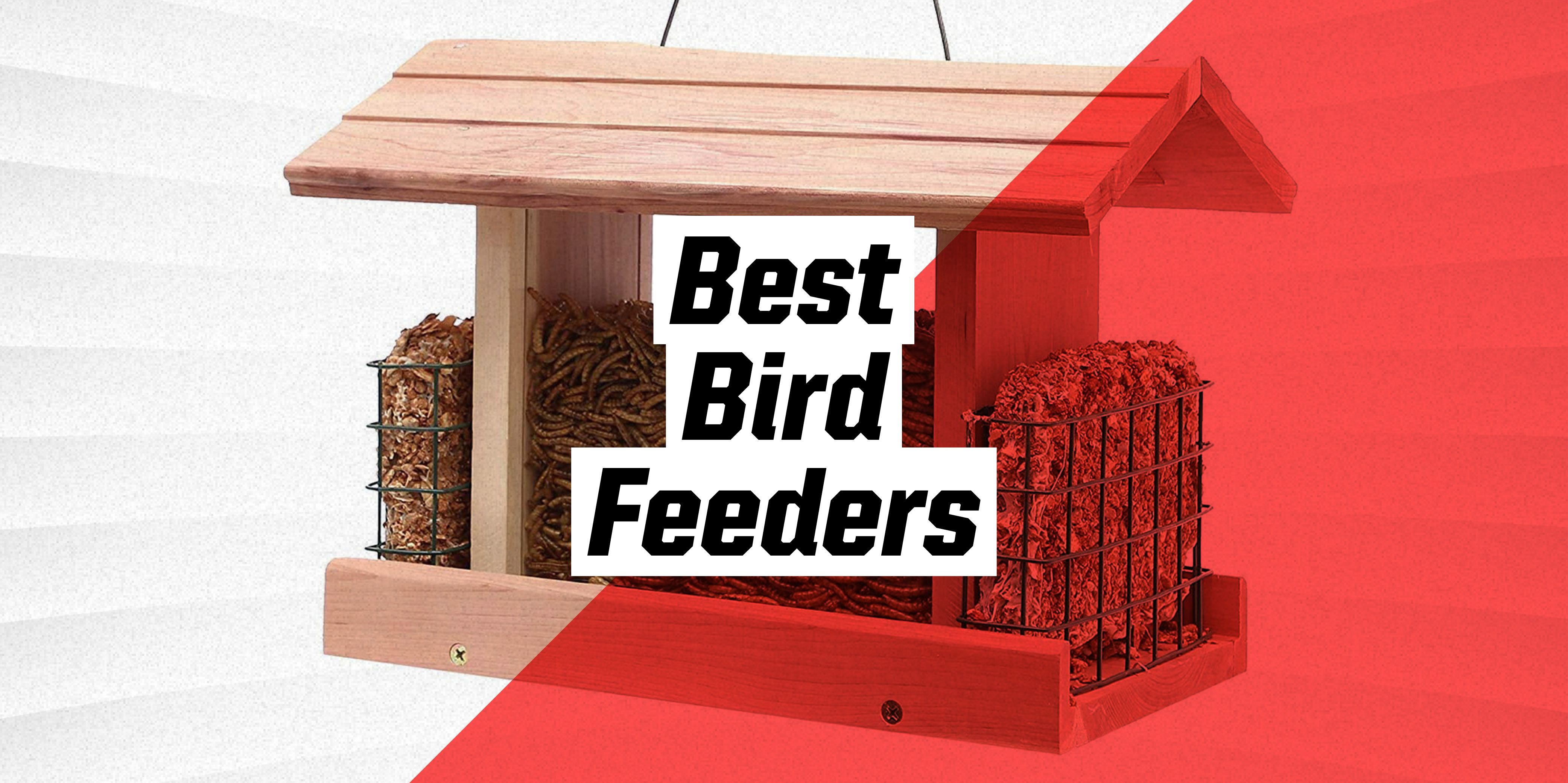 The 10 Best Bird Feeders to Buy Right Now