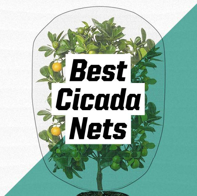best cicada nets
