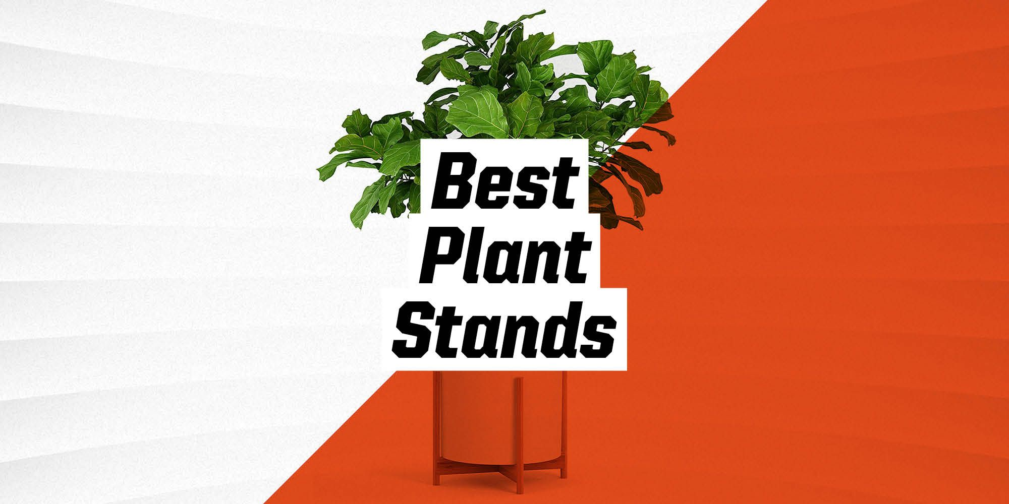 The 10 Best Plant Stands for Your Home