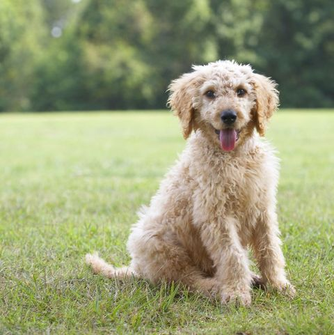 popular dog names - charlie