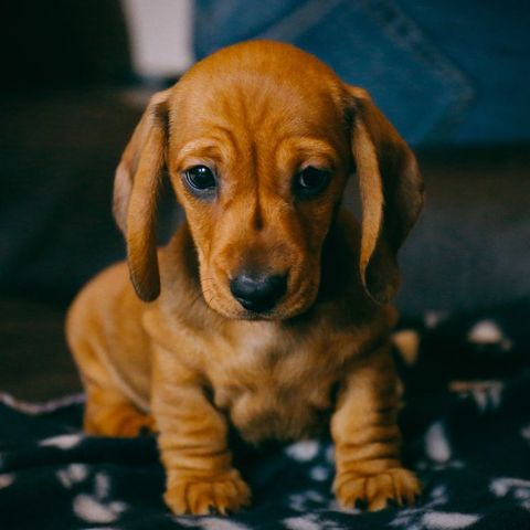 popular dog names - max