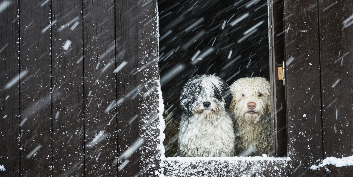 How To Care For Your Dog When During Freezing Cold Weather