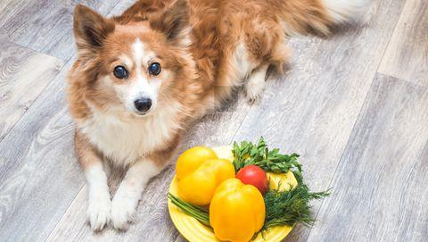 hond met pot laten mee eten