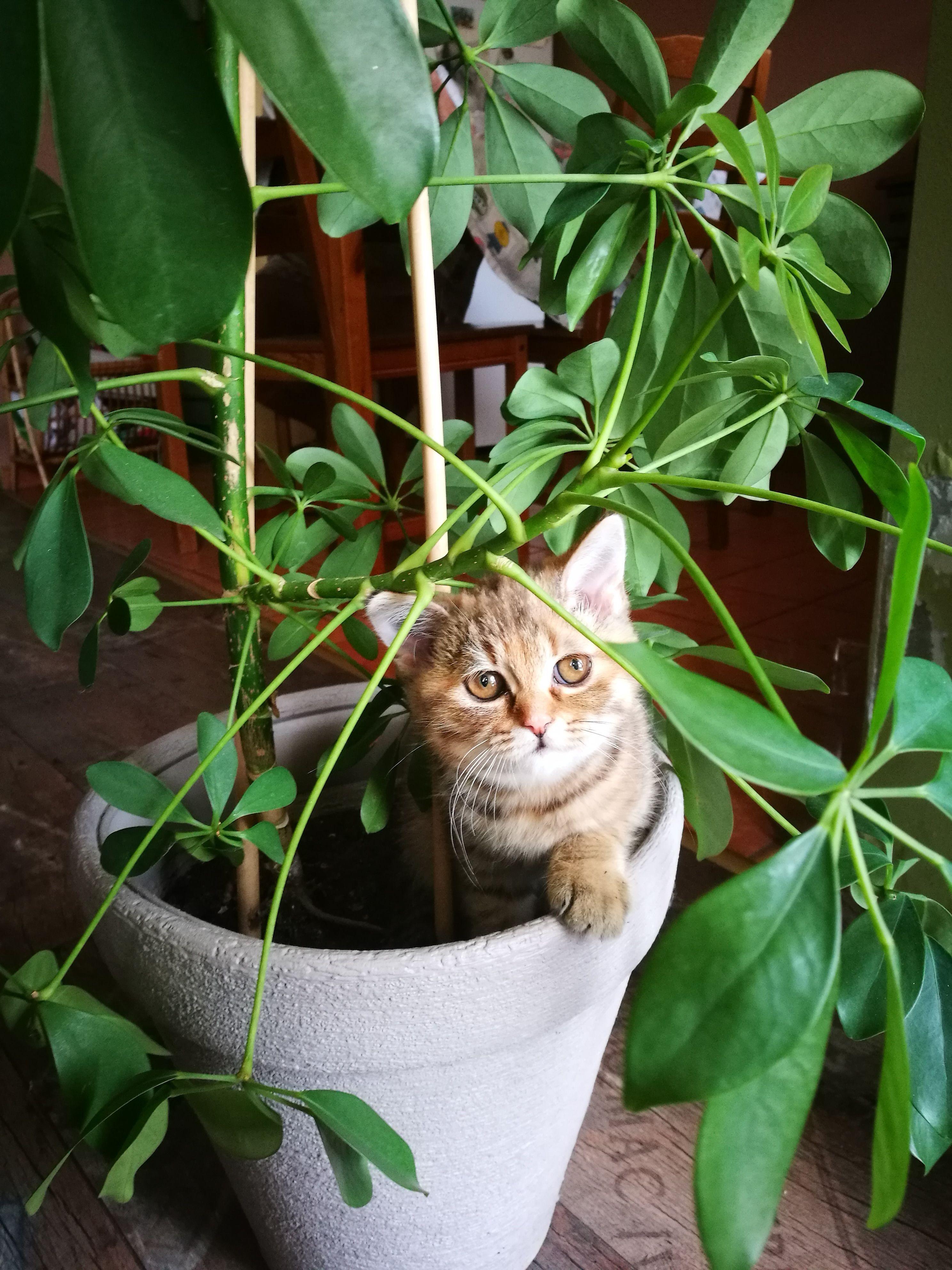 12 Plants Safe For Cats Best Cat Friendly Houseplants