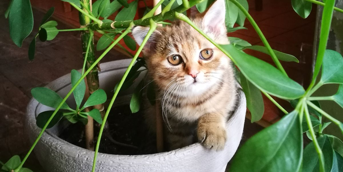 12 Houseplants That Are Safe to Keep Around Your Cats