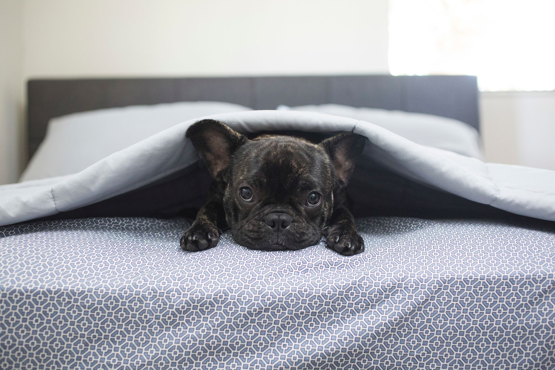 the best dog friendly hotel in every state best hotels for petsportrait of dog lying on bed