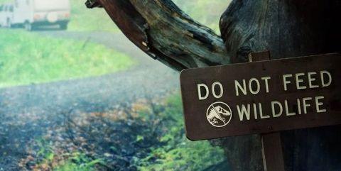 Sky, Natural environment, Font, Text, Tree, Wilderness, Morning, Photo caption, Mountain, Adaptation,