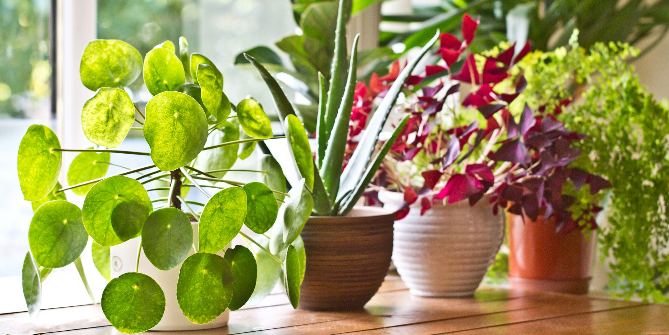 high quality indoor plants, healthy interior plants for home