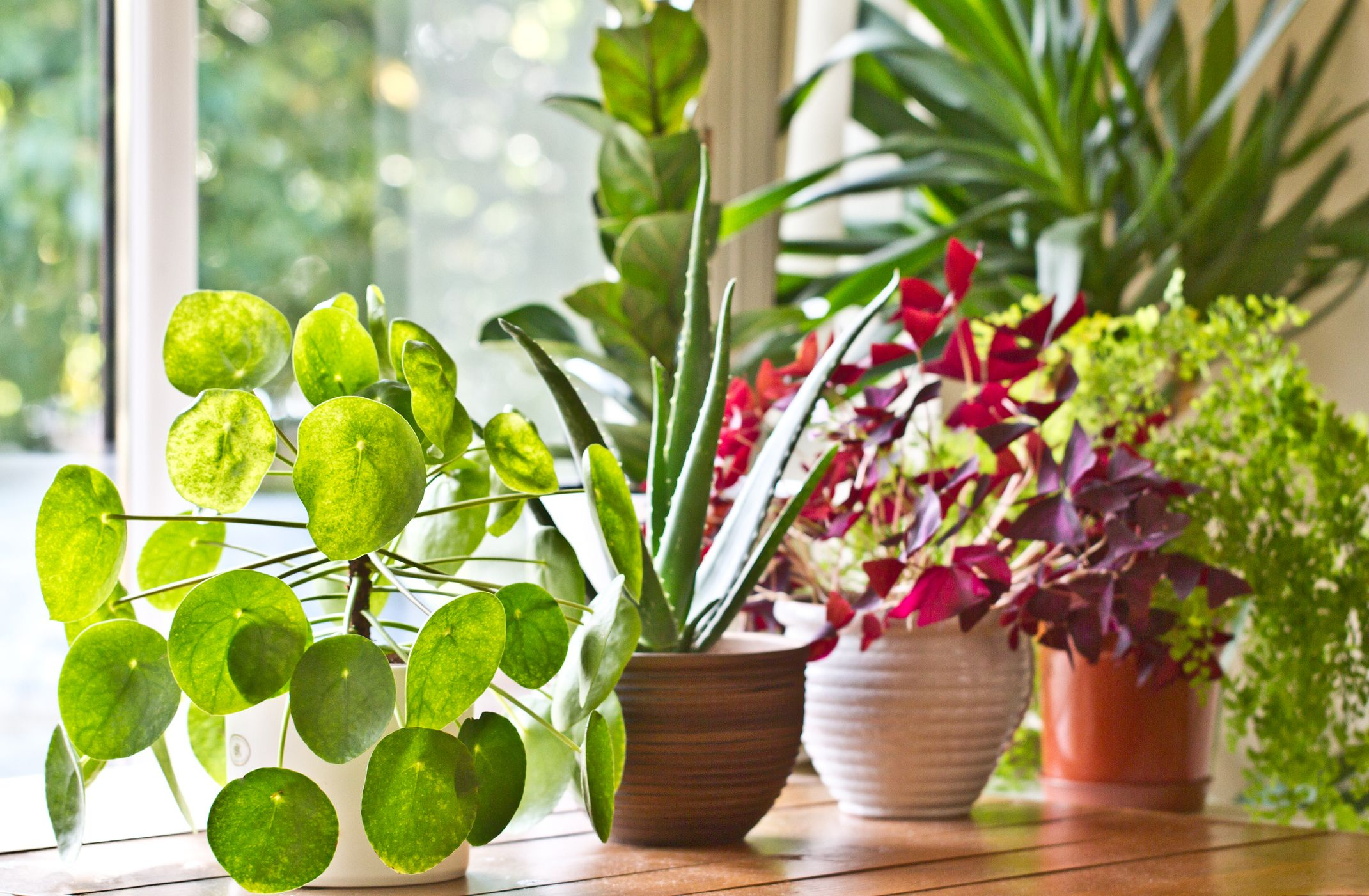 Amazing 30 Indoor Plants That Are Almost Impossible To Kill