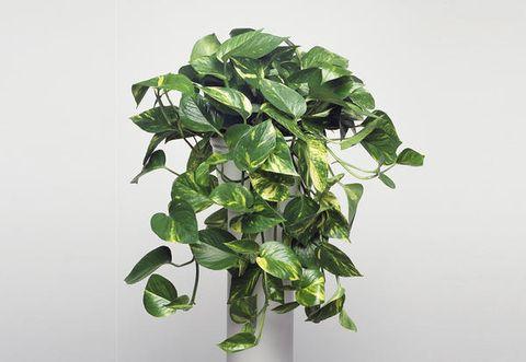 Le piante verdi che purificano l aria in camera da letto - Piante in camera ...