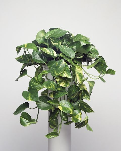 Indoor Apartment Plants: 15 Best Indoor Plants For Apartments