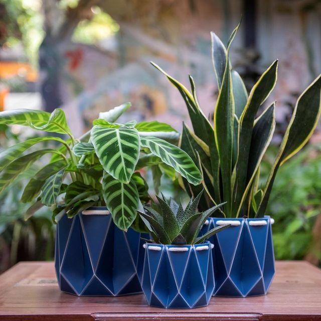 potr sustainable pots, eco friendly