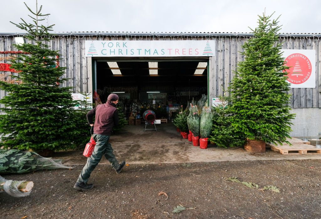 Buying a Potted Christmas Tree This Year? Here's What to Know