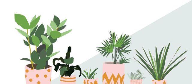artificial plant care