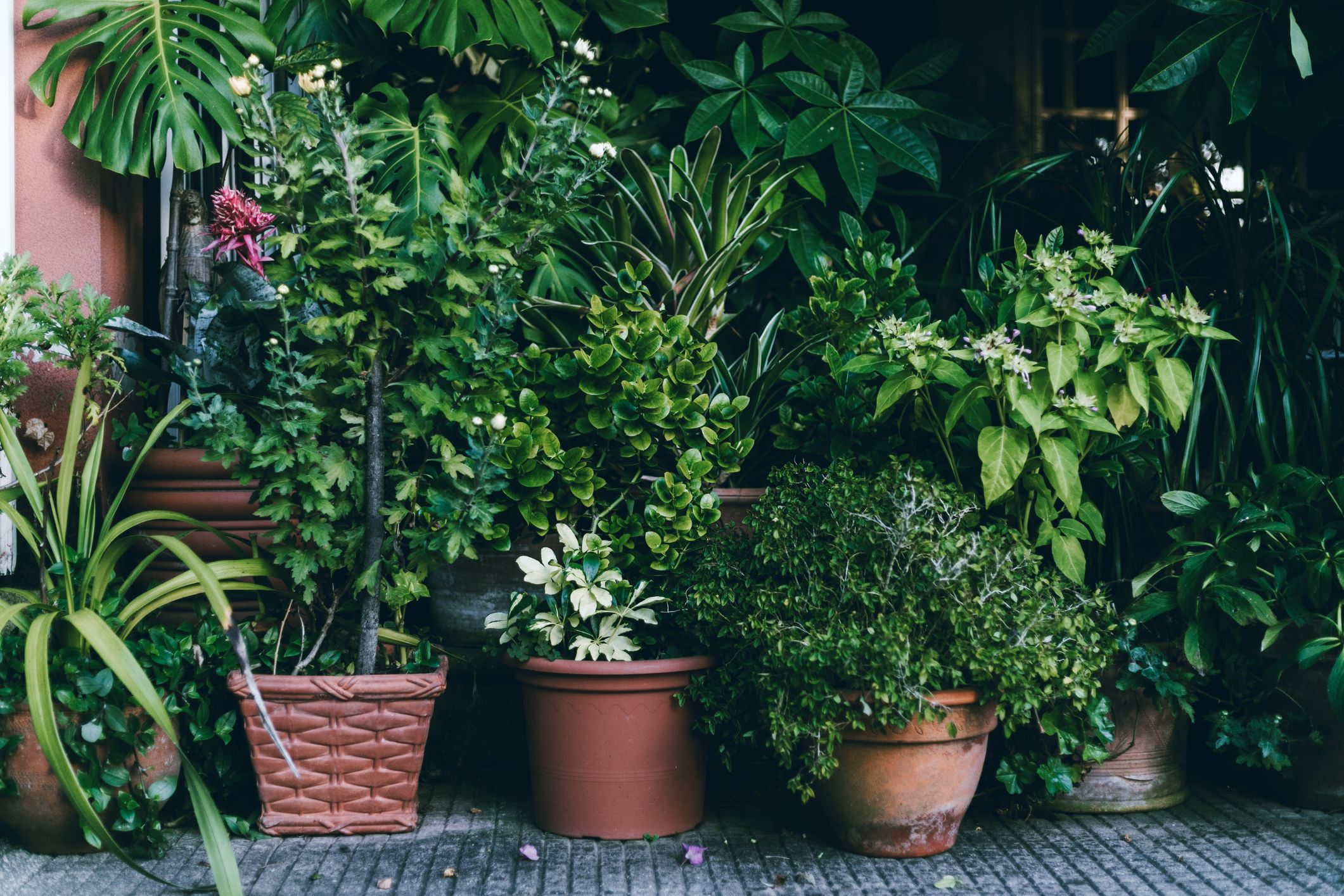 16 great books for gardening and indoor plant inspiration