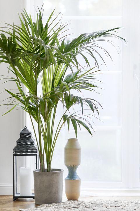 20 Best Bathroom Plants High Humidity Plants