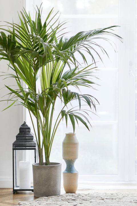 Oversized House Plants Tall House Plants