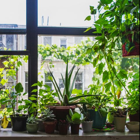 This Simple Invention Will Transform Your Window Into Plant-Hanging Heaven