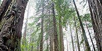 Media: Rave Run: Prairie Creek Redwoods State Park, CA