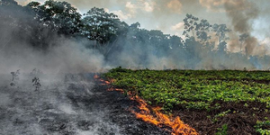 bosbrand-amazonegebied-brazilie