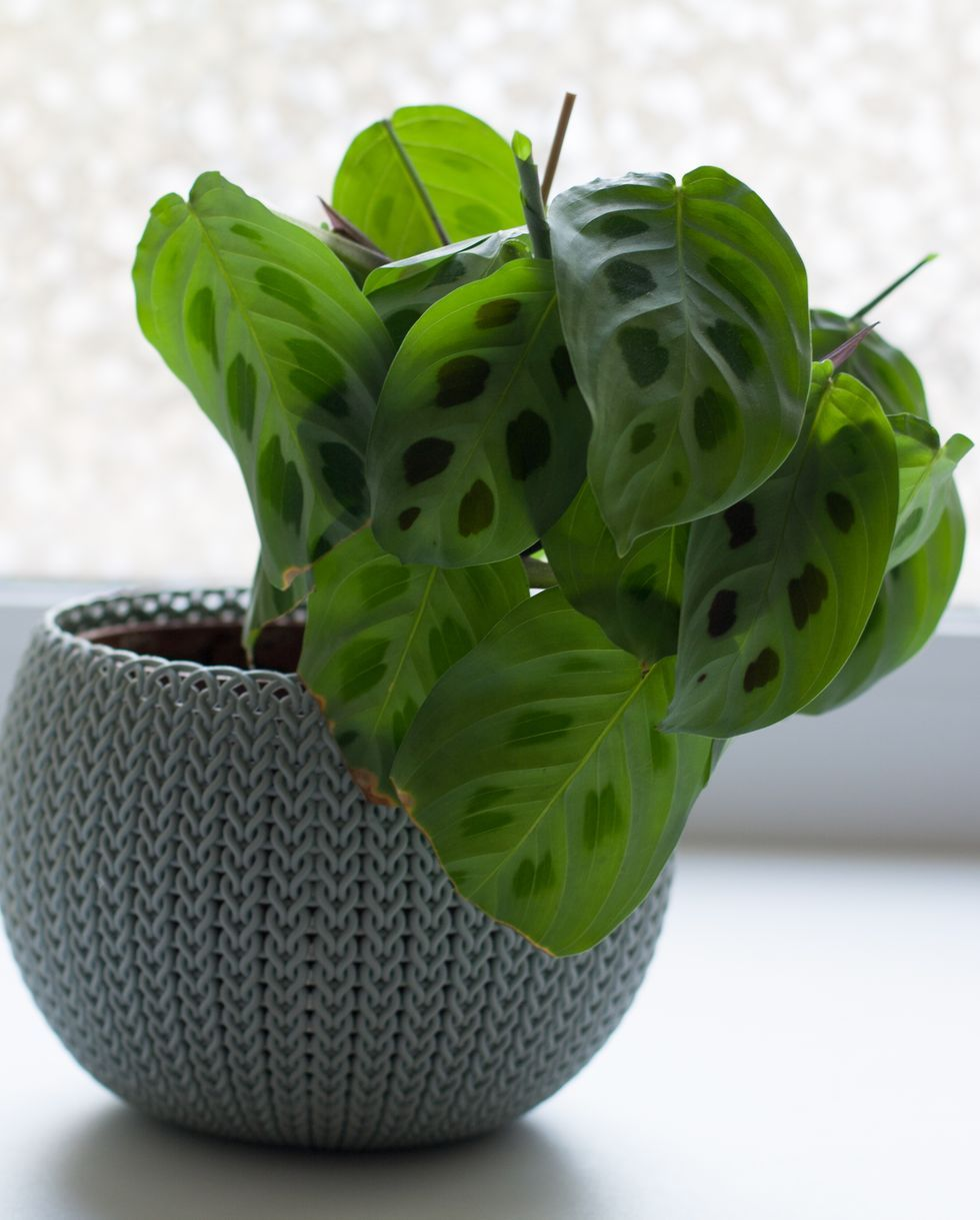 25 Best Indoor Plants Easy Indoor Gardening Ideas,Photos Beautiful Flower Images Download