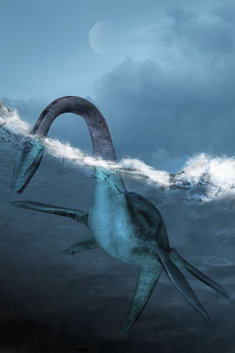 Prehistoric sea creature, illustration
