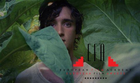 Green, Leaf, Eye, Adaptation, Organism, Plant, Smile, Flesh, Black hair,