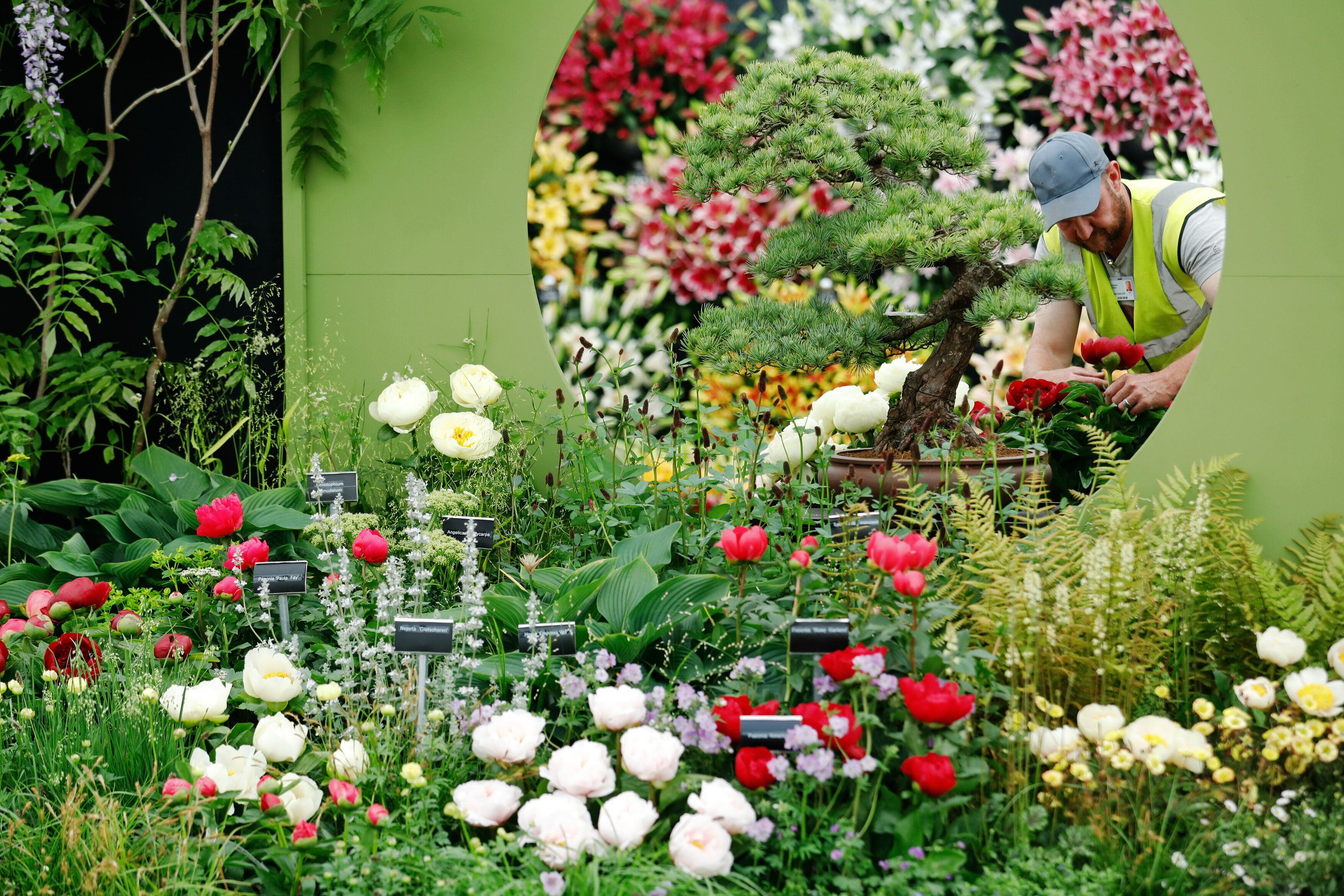Coronavirus (COVID-19): Chelsea Flower Show 2020 in May is cancelled, RHS confirms