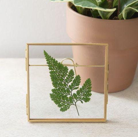 pressed leaf in frame