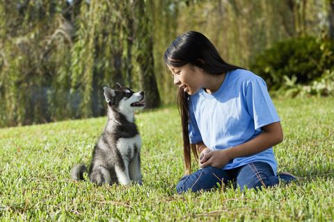 Preteen girl playing with puppy