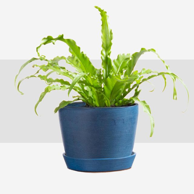prettiest indoor plants and accessories