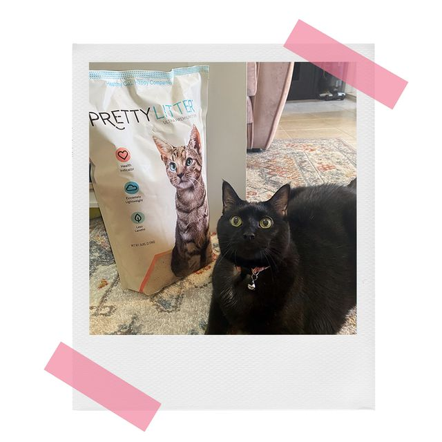 black cat with bag of pretty litter crystal kitty litter
