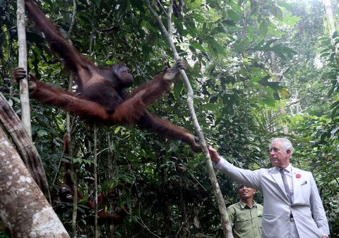 prince charles monkey The Prince Of Wales & Duchess Of Cornwall Visit Singapore, Malaysia, Brunei And India - Day 7