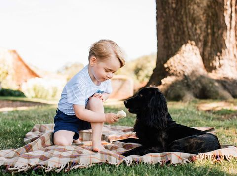 a royal birthday prince george turns four and is seen here feeding his ice cream to a dog on a picnic blanket