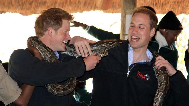 prince william and harry visit botswana day 2