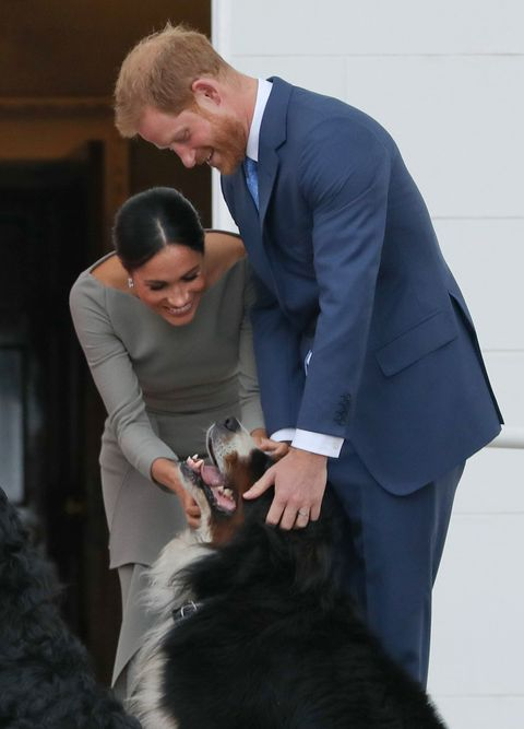 Prince Harry and Meghan Markle dog