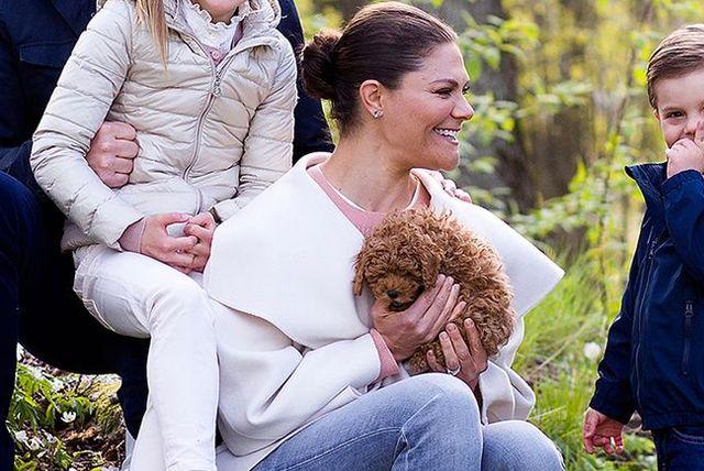 sweden princess estelle crown princess victoria dog puppy