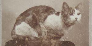 Kattenfoto's van vroeger