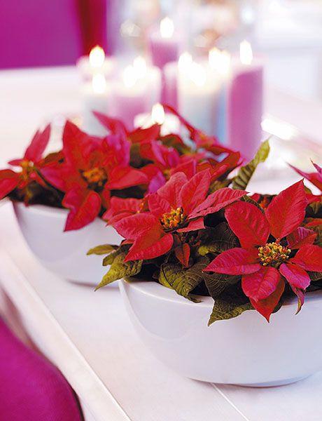 Red, Flower, Poinsettia, Pink, Centrepiece, Plant, Petal, Artificial flower, Cut flowers, Christmas decoration,