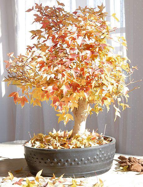 Tree, Plant, Leaf, Houseplant, Woody plant, Flower, Branch, Twig, Flowerpot, Centrepiece,