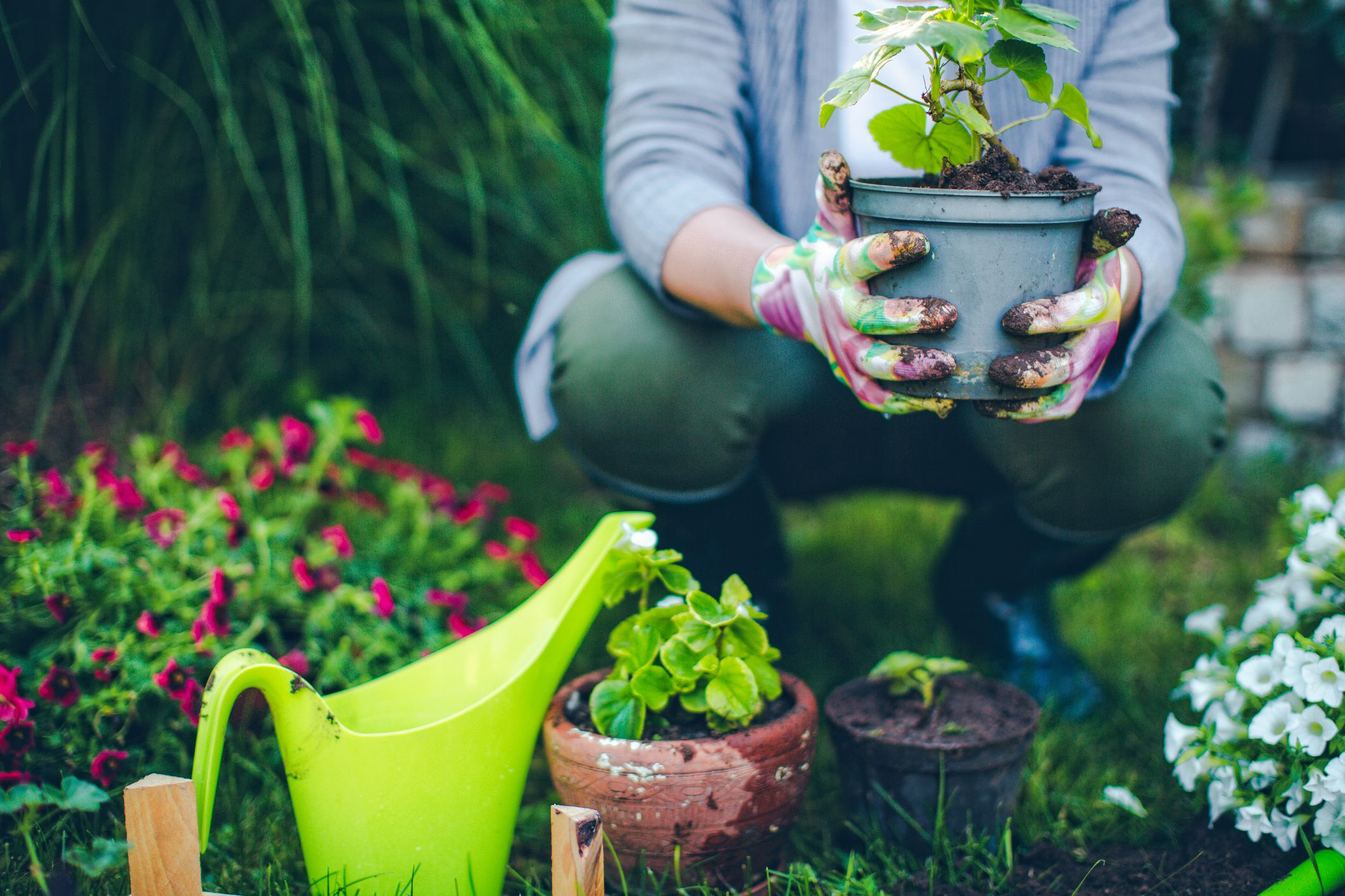 Image result for Growing Up Healthy: Tricks To Growing A Great Organic Garden