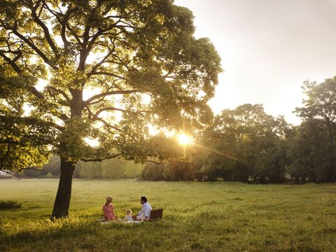 petersham nurseries picnic service