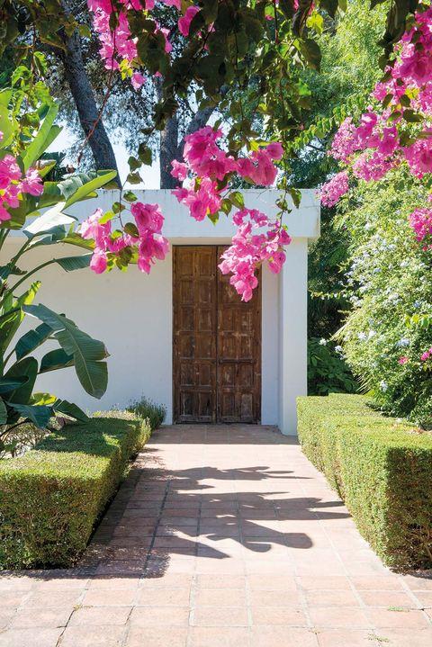Pink, Flower, Garden, Property, Spring, Bougainvillea, Plant, Tree, Botany, Walkway,