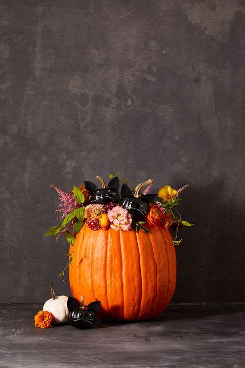 pumpkin carving ideas kitten pumpkin