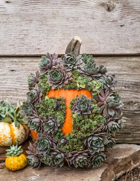 pumpkin decorating ideas succulent monogram