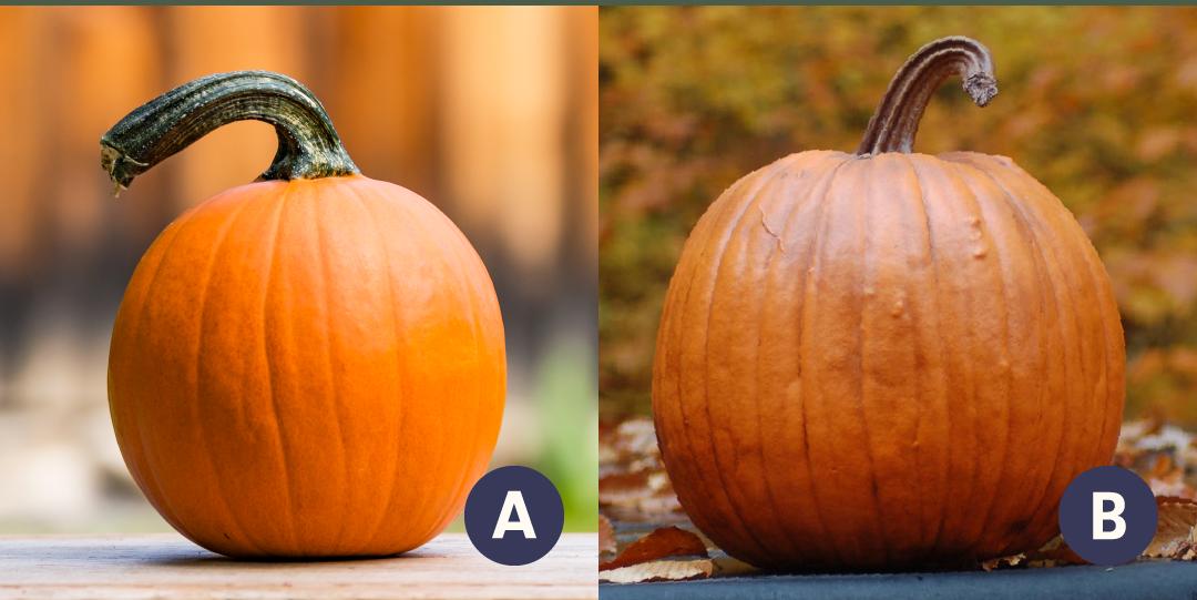Faux Pumpkin Quiz Can You Spot The Fake Pumpkin