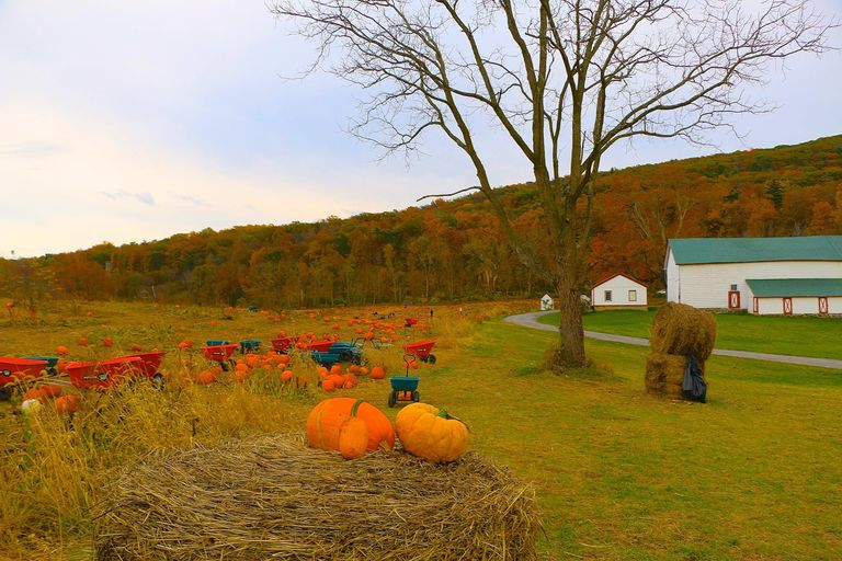 25 Pumpkin Farms Near Me The Best Pumpkin Patches In America