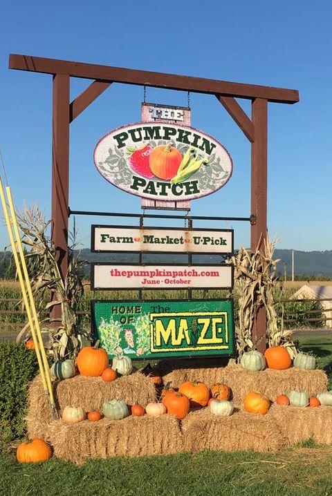 25 Pumpkin Farms Near Me The Best Pumpkin Patches In America
