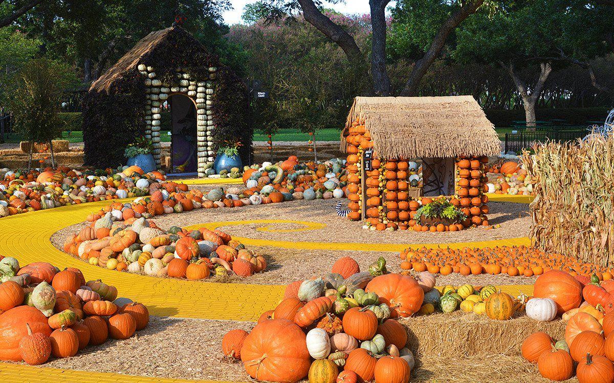 33 Pumpkin Farms Near Me - Pumpkin Picking Near Me